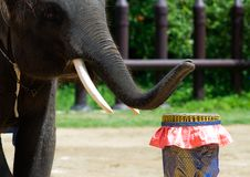 Free Elephant Show Stock Photos - 14602943