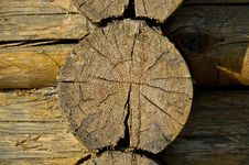 Free Sawn End Of Dry Log Stock Images - 14603294
