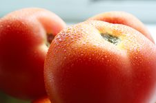 Free Tomatoes Stock Images - 14603604