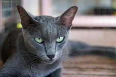 Free A Gray Cat Royalty Free Stock Images - 14603709
