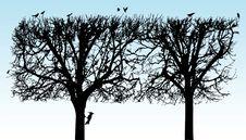 Free Tree Stock Photos - 14603993