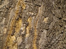 Free Background From A Bark Of An Old Tree Stock Photography - 14604832