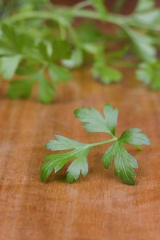 Free Green Parsley Stock Photography - 14605242