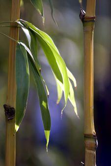 Free Bamboo Closeup Royalty Free Stock Photo - 14605465