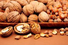 Free Walnut And Hazelnut Royalty Free Stock Images - 14605939