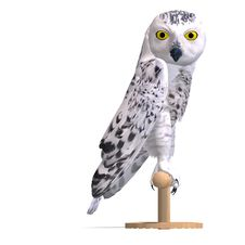 Free Snowy Owl Bird. 3D Rendering With Clipping Path Royalty Free Stock Images - 14606149