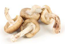 Free Mushrooms Stock Photo - 14606230