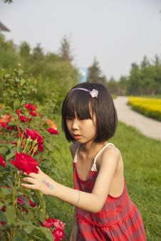Free Asian Girl And Red Rose Flowers Royalty Free Stock Images - 14606399