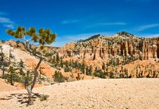 Free Pine Tree In Bryce Canyon Royalty Free Stock Images - 14607079