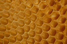 Free Honeycomb Royalty Free Stock Photography - 14607747