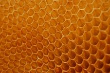 Free Honeycomb Royalty Free Stock Photos - 14607758
