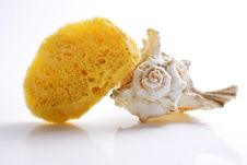 Sponge Shell Royalty Free Stock Photography