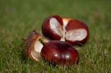 Free Chestnuts Stock Image - 14608801