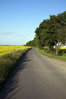Free Way, Rape Field And Trees Stock Image - 14608861