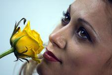 Free Yellow Rose Stock Photos - 14609023