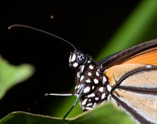 Free Tropical Butterfly Royalty Free Stock Images - 14609339