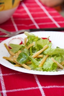Free Fresh Salad Stock Images - 14609564