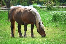 Free Beautiful Blond Stallion Stock Photography - 14609722