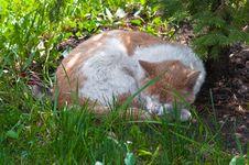 Free Sleeping Cat Royalty Free Stock Photos - 14609748