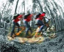 Free Сyclist, Racing Through The Woods Royalty Free Stock Images - 14616759