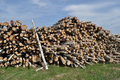 Free Pile Of Birch Logs Royalty Free Stock Photography - 14627537