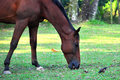 Free Horse And Bird Feeding Together Royalty Free Stock Photography - 14628807