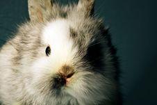 Free White Rabbit Stock Photos - 14623073