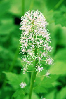 Free Flower Royalty Free Stock Image - 14623966