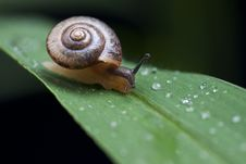 Free Small Snail Stock Photo - 14625700