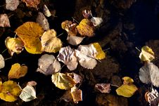 Free Golden Fall Leaves Stock Image - 14629021