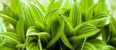 Free Plant Stock Image - 14629711