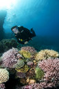 Free Male Scuba Diver On Colorful Coral Reef Royalty Free Stock Images - 14636929