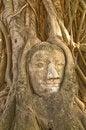 Free Head Of Buddha Statue In Tree, Ayutthaya Royalty Free Stock Image - 14639726