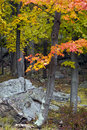 Free Autumn Forest Royalty Free Stock Image - 14639856