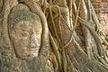 Free Head Of Buddha Statue In Tree, Ayutthaya Royalty Free Stock Photo - 14639945