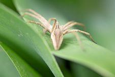 Free Spider Royalty Free Stock Photos - 14631118