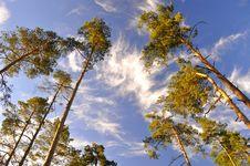 Free Trees Stock Photography - 14631662