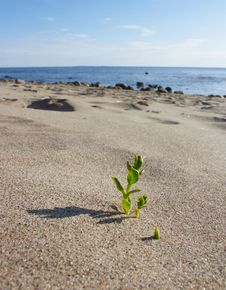 The Plant On The Beach. Stock Photo