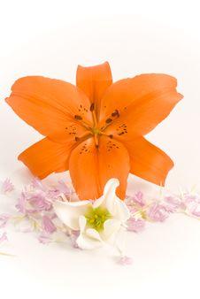 Free Flowers Royalty Free Stock Photos - 14633098