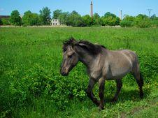 Free Wild Horse Royalty Free Stock Image - 14633206