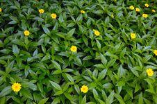 Free Wild Flower Royalty Free Stock Image - 14634516