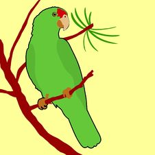 Free Red Crowned Amazon Parrot Stock Photos - 14634593