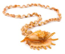 Free Necklace Made Of Sea Shell Stock Photo - 14634920