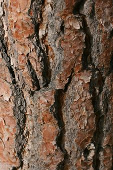 Free Tree Bark Stock Images - 14635224