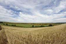 Free Wheat Field, Harvest. Royalty Free Stock Photos - 14635248
