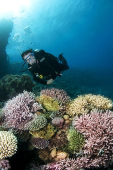 Male Scuba Diver On Colorful Coral Reef Royalty Free Stock Images