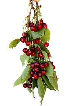 Free Fresh Cherries Stock Photos - 14637253