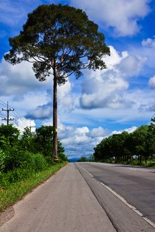 Free Big Tree Beside Country Road In Thailand Royalty Free Stock Photography - 14637447