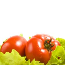 Free Tomatoes In Salad Leaves Royalty Free Stock Photo - 14637725