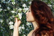 Free Girl In Blossom Stock Photo - 14638620